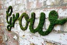 Garden of Eden / Keeping it green! Inspiration for growing a beautiful garden.