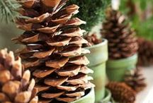 Winter Holiday Ideas / by Jill McCulley