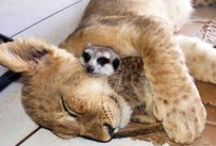 Strange Bedfellows / The intrigue of interspecies relationships