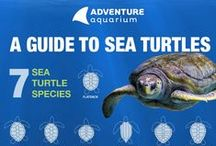 What's happening at Adventure Aquarium? / There are always new things to see and do at Adventure Aquarium. Visit our website to learn what's going on! / by Adventure Aquarium