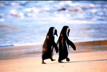 Penguins / by Adventure Aquarium