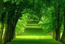 Home: Pathways