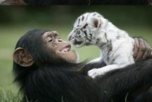Photography:  Wildlife