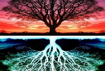 Photography:  Trees