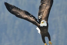 Photography:  Birds