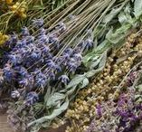 Herbal Remedies and Recipes / Herbal remedies, herbal medicine, herbal medicine recipes.