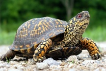 Animals - Are you a Turtle? / by Kimberly Wies