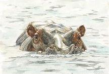 Animals - Hippos & Rhinos / by Kimberly Wies