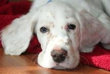 Doggles / Dog breeds I love :)