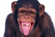 Animals - Primates / by Kimberly Wies