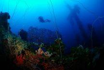 Aquatic Life / by Scott Sanders
