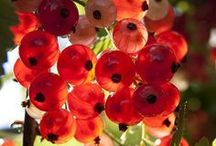 Garden: berries