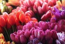 Garden: Bulbs