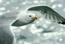 Birds / by Kimberly Wies
