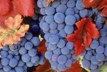 Garden: Grapes