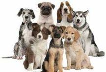 Animals - Dog / by Kimberly Wies