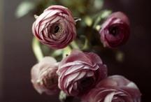 flowers / by Lorajean G