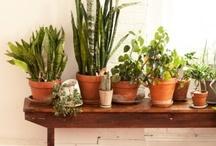 garden -  plants indoors / by Lorajean G