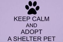 Shelter Ideas / Think Adoption. / by Tricia Boone