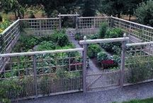 In the Garden / by Pamela Melby