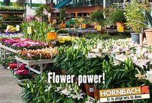 Tuin | Hornbach / Voor in huis of in de tuin, Hornbach heeft een groot assortiment aan bloemen en planten. Frivole viooltjes of krachtige cactussen, we hebben het allemaal.