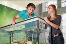 Dieren en aquaria | Hornbach / Voor ons gevleugelde, langharige, of zwemmende vriendjes hebben wij ook genoeg in ons assortiment. Kijk ook eens op http://bit.ly/1Lce2az