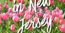 New Jersey Travel Fun (and Beyond)! / Check this board for FUN things to do in New Jersey and beyond! Parks, farms, events, theme parks, shows, day trips and more!