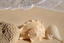 Beach, sand, water and AwL / by Wanda Barcus