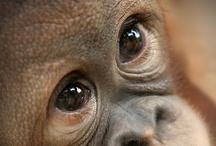 Animal Eyes / by Wanda Barcus