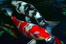 ~~ Sous l'eau ~~ / Habitants du monde sous marin / by Fever Sonia