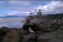 The Beauty of Oregon's Coast / All the wonder and beauty of the Oregon coast