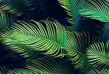 Obsessional Palm Trees
