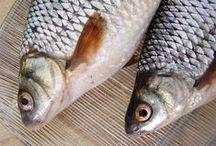 Süßwasserfisch / Bilder und Rezepte mit heimischem Süßwasserfisch (Karpfen, Forelle, Saibling, Maräne, Stint, Flussbarsch, Hecht, Zander, europ. Wels, Karausche, Schleie, Äsche, Rotauge, Barbe, Stör und Quappe aber auch Lachs und Aal) siehe auch http://www.multikulinarisch.es/pages/suesswasserfisch-steckbriefe.html