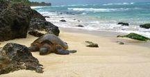 Travel ~ Hawaii