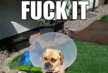Funny Funny / by Megan Owens
