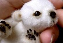 Cute animals / by Jane Boardman