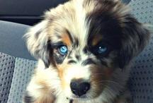 Puppy L❤️VE