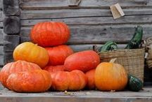 Let's Get Seasonal / Seasonal ideas and decorations. / by Deborah Burstyn