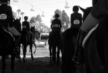 Show Season, Training, and Tips / Get inspired and prepared for the show season! / by Natalie Arellano