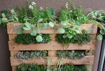 gardening & outdoors / by Amy Wilson