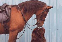 Horses and nature / Riding Self-made Entrepreneur / Brand Queen / Business Boss. Sharing advise on business strategy and branding.  http://youtube.com/heyxuemei http://youtube.com/startupcabin 11 years as an entrepreneur. Still just 29. 4 companies. 3 continents. 1 bulldog. Goal to make more entrepreneurs to succeed.  instagram.com/heyxuemei Snapchat: HeyXueMei Beme: https://beme.com/xuemei Tumblr: heyxuemei.tumblr.com www.xuemeirhodin.com #workhardplayhard #betheinspiration #setgoalsdontjustdream