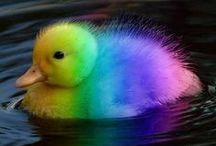 Favorite colors / colors