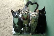 Feline Friends / Cute cats. LOLcats. I love 'em all (especially my two).