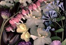 Nature | Florals