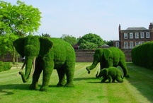 Topiary Gardens / by Christine Daniel Miller