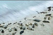 Cornish Wildlife