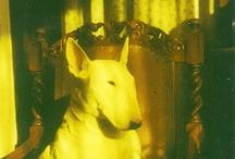 bull terriers / by Nel Willems