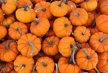 HOLIDAYS - Halloween