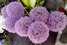 Flores de SieteFlores / Flores de nuestro Quiosco en Zaragoza
