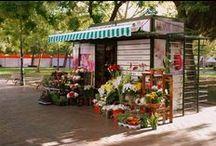 El Quiosco de Flores / Fotos del Quiosco de Flores y Plantas de la Plaza de los Sitios de Zaragoza